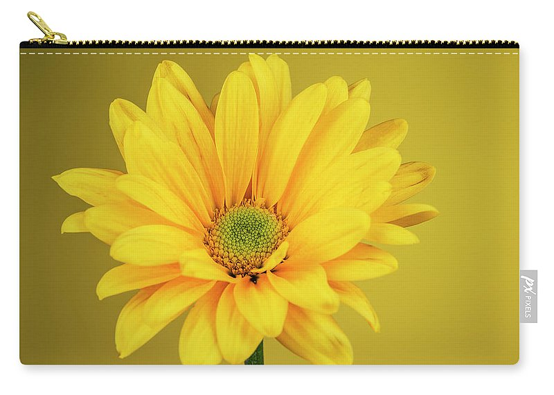 Chrysanthemum Carry-all Pouch featuring the photograph Yellow Chrysanthemum On Yellow by Vishwanath Bhat