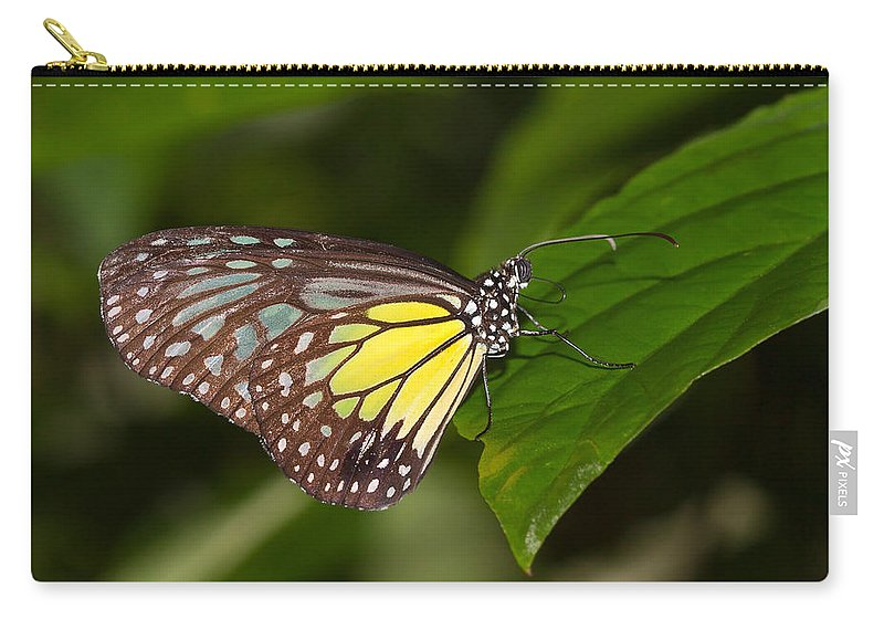 Butterfly Carry-all Pouch featuring the photograph Yellow Glassy Tiger Butterfly by Louise Heusinkveld