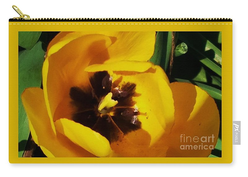 Floral Art Tulip Spring Vision Yellow Nature Macro Flower Black Core Outdoors Garden Art Beauty Green Background Canvas Print Metal Frame Poster Print Available On Mugs T Shirts Greeting Cards Shower Curtains Tote Bags Throw Pillows Pouches Weekender Tote Bags Beach Towels And Phone Cases Carry-all Pouch featuring the photograph Yellow Glory From A Tulip by Marcus Dagan