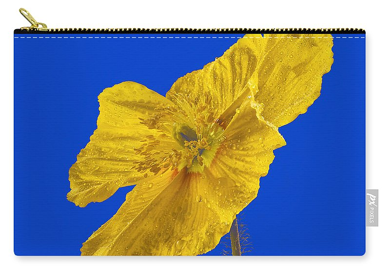Color Carry-all Pouch featuring the photograph Yellow Poppy On Blue Background by Jean Noren