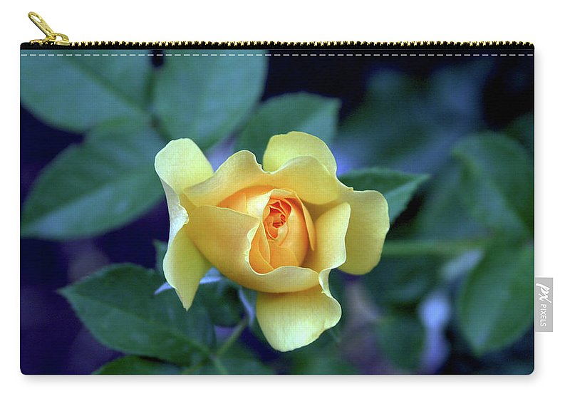 Yellow Rose Carry-all Pouch featuring the photograph Yellow Rose With Purple Contrast 0357 H_2 by Steven Ward