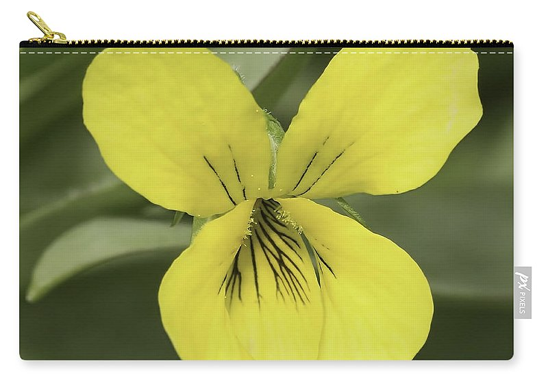 Flower Carry-all Pouch featuring the photograph Yellow Wild Violet by Nikki Vig
