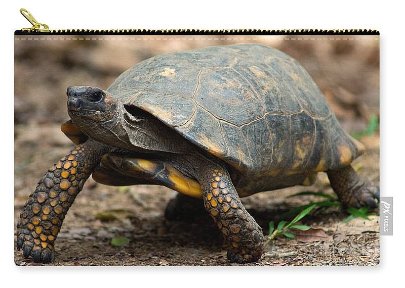 Yellowfoot Tortoise Carry-all Pouch featuring the photograph Yellowfoot Tortoise by Dant� Fenolio