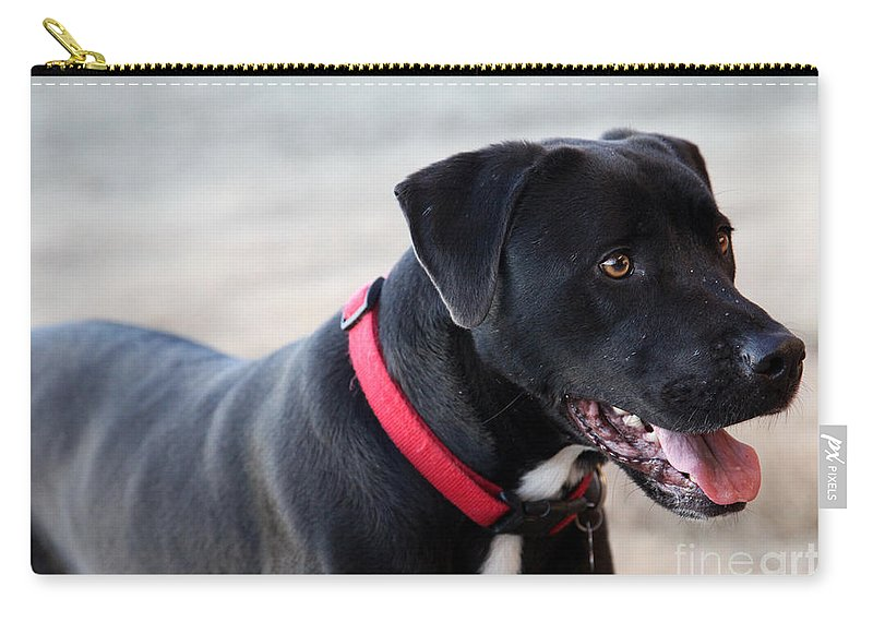 Dogs Carry-all Pouch featuring the photograph Yes I Want To Play by Amanda Barcon