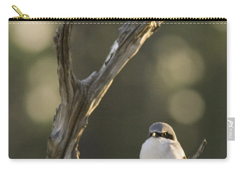 Bird Carry-all Pouch featuring the photograph You Lookin At Me by Phill Doherty