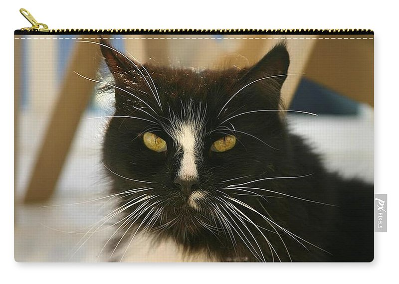 Cat Carry-all Pouch featuring the photograph You Talkin To Me? by Pattie Frost