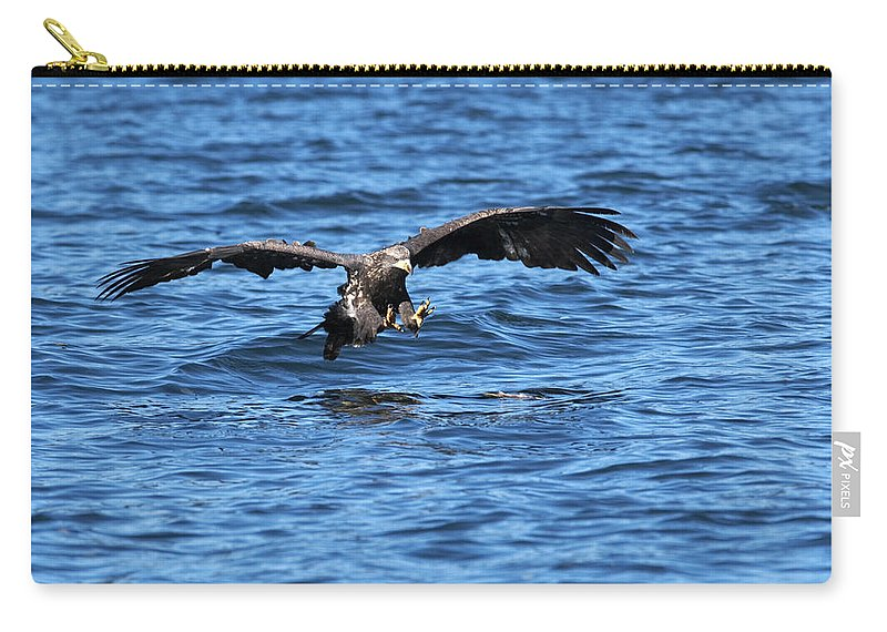 Bald Eagle Carry-all Pouch featuring the photograph Young Bald Eagle I by Randall Ingalls