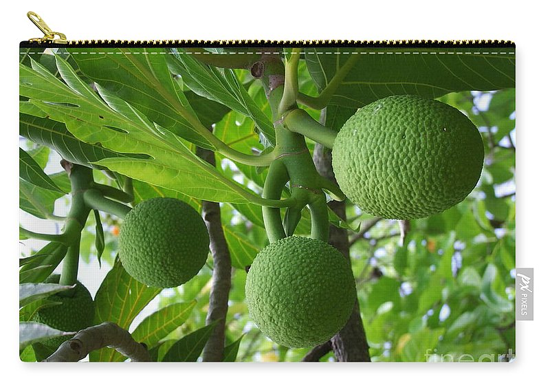 Breadfruit Carry-all Pouch featuring the photograph Young Breadfruit by Mary Deal