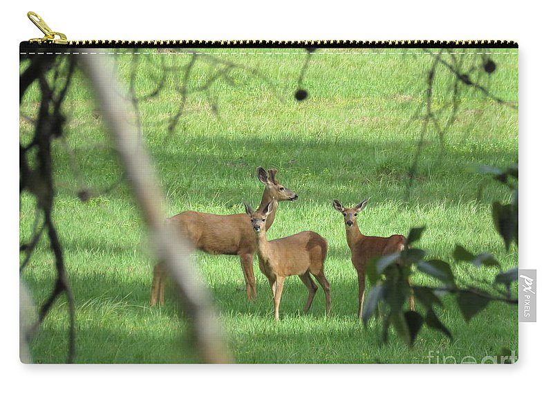 Deer Carry-all Pouch featuring the photograph Young Buck With Two Does In The Meadow by Mel Manning