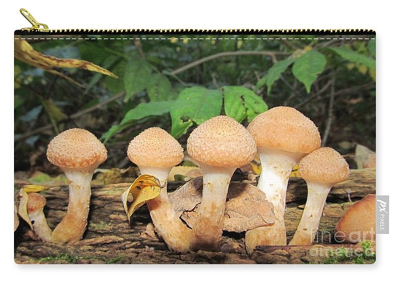 Young Honey Mushrooms Maryland Mushrooms Edible Mushrooms Dangerous Look Alikes Mycelia Mycologist North American Mycology North American Mushrooms North American Fungi Images Toadstools Tan Fungi Medicinal Mushrooms Seasonal Forest Flora Oldgrowth Forest Biodiversity Preservation American Woodland Wildlife Conservation Green Interior Design Nature Prints Nature Photography Natural Design Fruiting Fungi Images Temperate Forest Flora Naturalist Outdoors Maryland Outdoor Education Stop Sprawl Forest Ecology Wild Foods Survivalist Mushroom Identification Carry-all Pouch featuring the photograph Young Honey Mushrooms by Joshua Bales