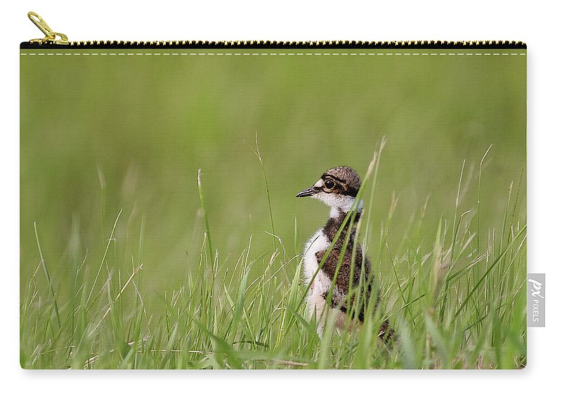 Killdeer Carry-all Pouch featuring the digital art Young Killdeer In Grass by Mark Duffy