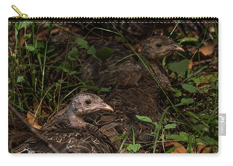 Birds Carry-all Pouch featuring the photograph Young Wild Turkeys by Bruce Frye