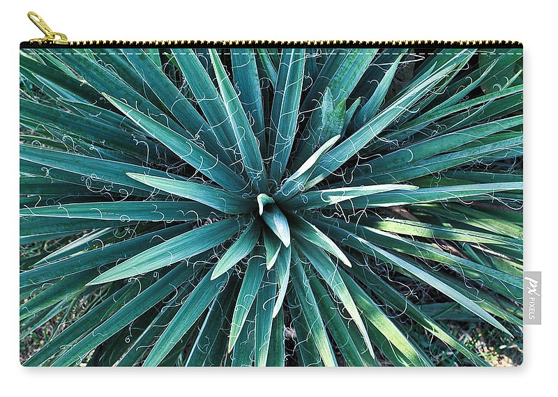 Yucca Carry-all Pouch featuring the photograph Yucca plant detail by Douglas Barnett