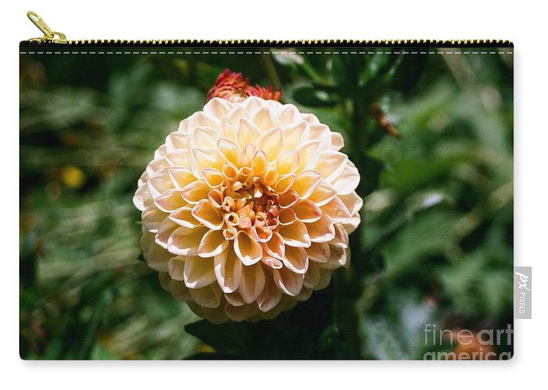 Zinnia Carry-all Pouch featuring the photograph Zinnia by Dean Triolo