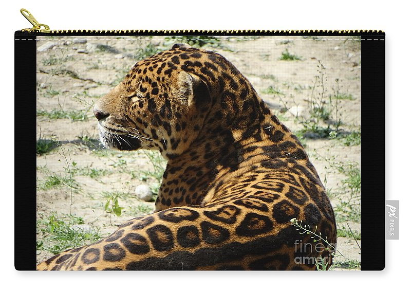 Wild Carry-all Pouch featuring the photograph Zoo 2015 006 by Dan Marinescu