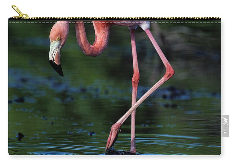 Animal Themes Carry-all Pouch featuring the photograph American Flamingo Phoenicopterus Ruber by Art Wolfe