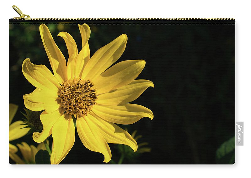 Photography Carry-all Pouch featuring the photograph Daisy by Amanda Lorance