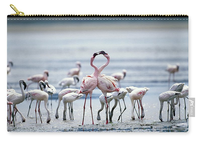 Tanzania Carry-all Pouch featuring the photograph Lesser Flamingoes Phoeniconaias Minor by Paul Souders