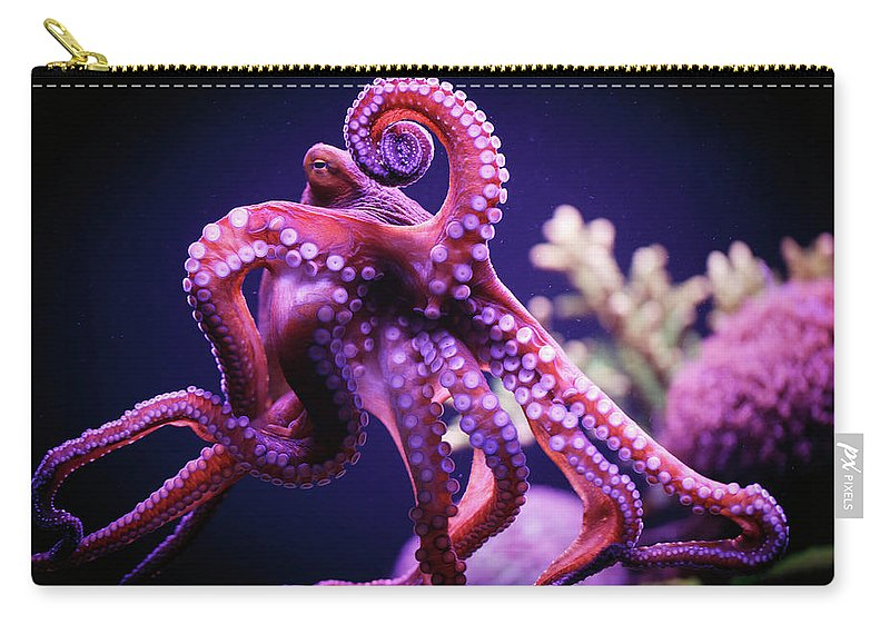 Underwater Carry-all Pouch featuring the photograph Octopus by Reynold Mainse / Design Pics