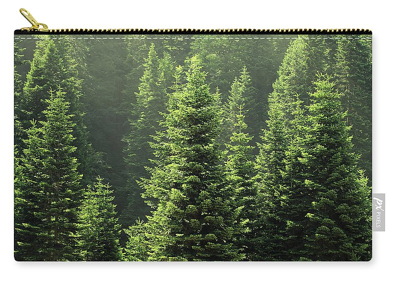 Scenics Carry-all Pouch featuring the photograph Pine Tree by Petekarici