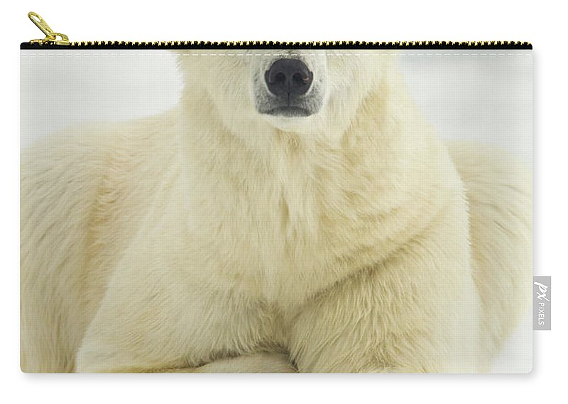 Dawn Carry-all Pouch featuring the photograph Polar Bear, Svalbard, Norway by Paul Souders