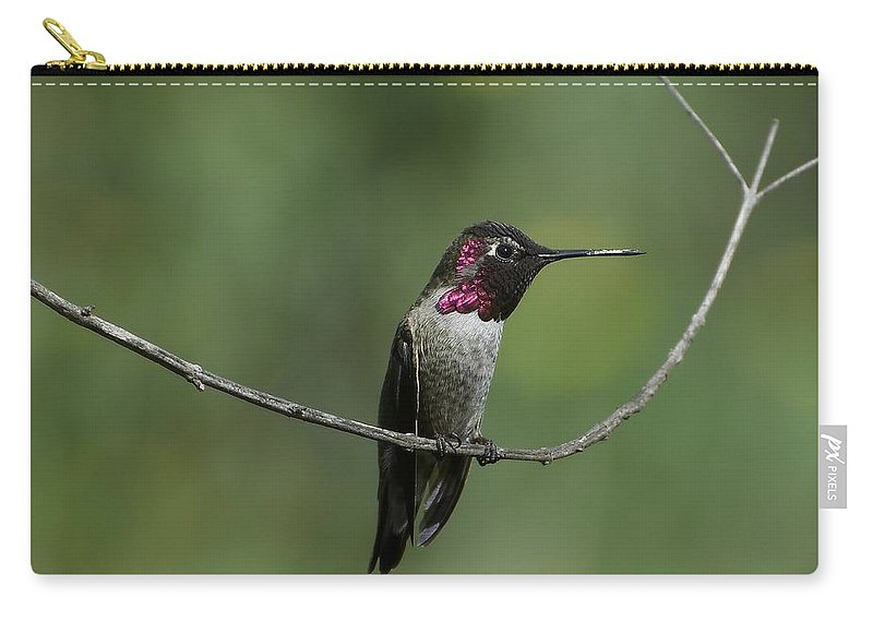 Anna's Hummingbird Carry-all Pouch featuring the photograph Pretty Little Things by Fraida Gutovich