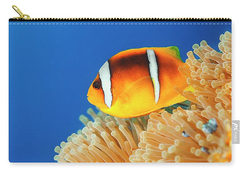 Underwater Carry-all Pouch featuring the photograph Sea Life - Anemone Clownfish by Ultramarinfoto