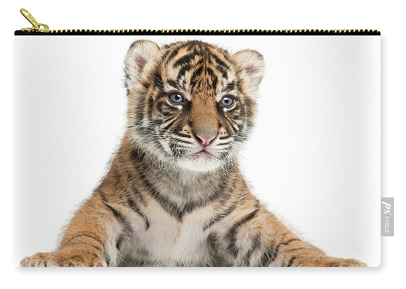 White Background Carry-all Pouch featuring the photograph Sumatran Tiger Cub - Panthera Tigris by Life On White