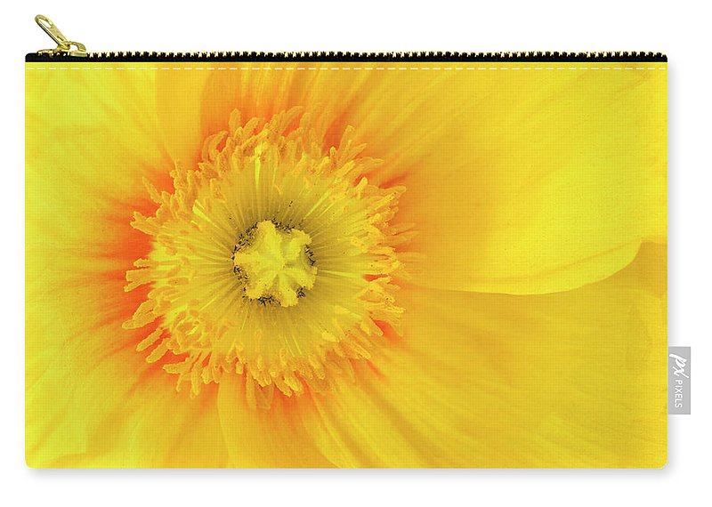 Iceland Poppy Carry-all Pouch featuring the photograph Sunshine by Patty Colabuono
