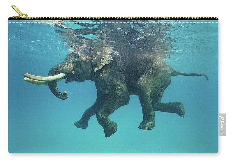 Underwater Carry-all Pouch featuring the photograph Swimming Elephant by Mike Korostelev Www.mkorostelev.com