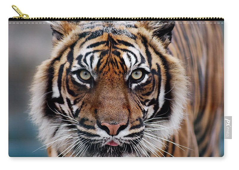 Snow Carry-all Pouch featuring the photograph Tiger by Freder