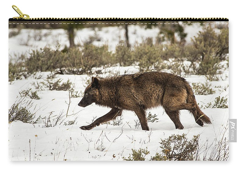 Wolf Carry-all Pouch featuring the photograph W10 by Joshua Able's Wildlife