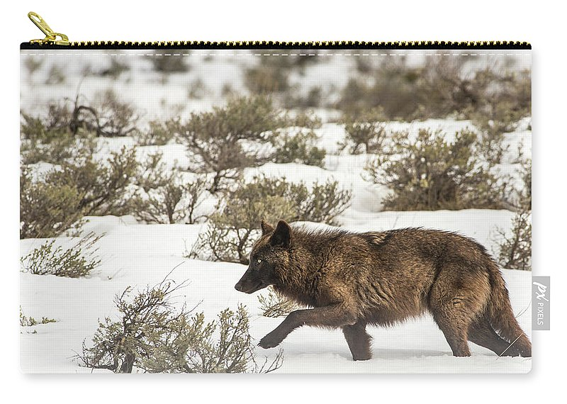 Wolf Carry-all Pouch featuring the photograph W3 by Joshua Able's Wildlife