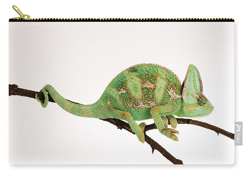 White Background Carry-all Pouch featuring the photograph Yemen Chameleon Sitting On Branch by Martin Harvey