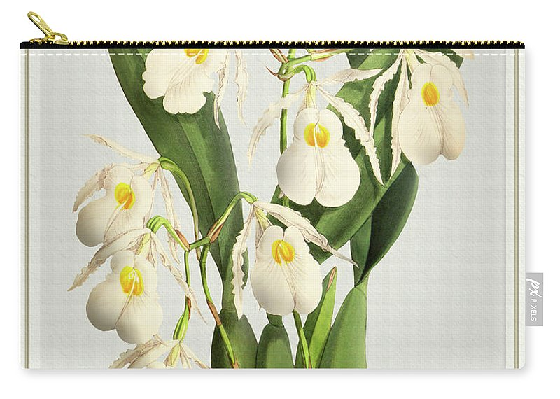 Vintage Carry-all Pouch featuring the drawing Orchid Vintage Print On Tinted Paperboard by Baptiste Posters