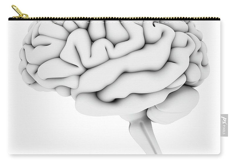 White Background Carry-all Pouch featuring the digital art Brain, Artwork by Pasieka