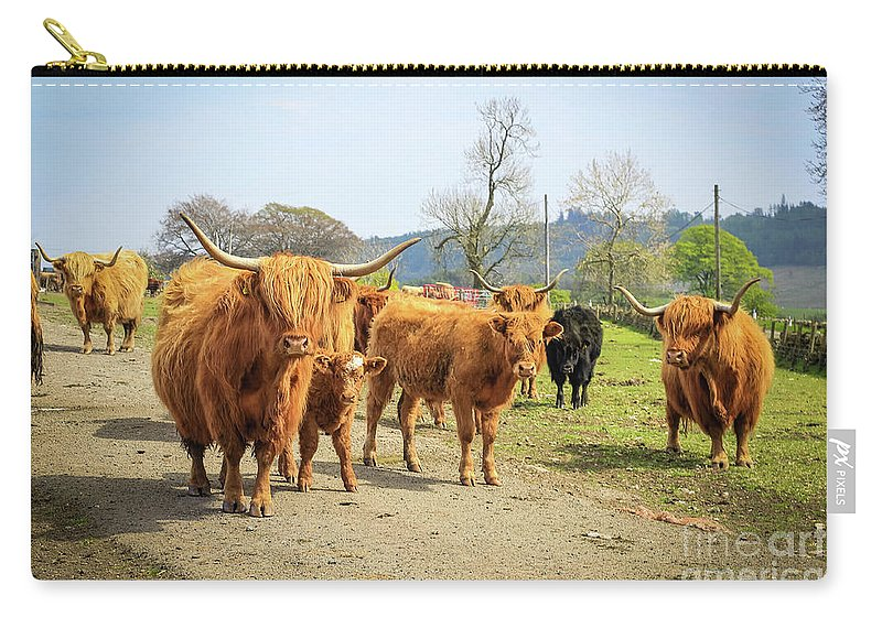 Contemporary Carry-all Pouch featuring the photograph Highland Cattle by Malgorzata Larys