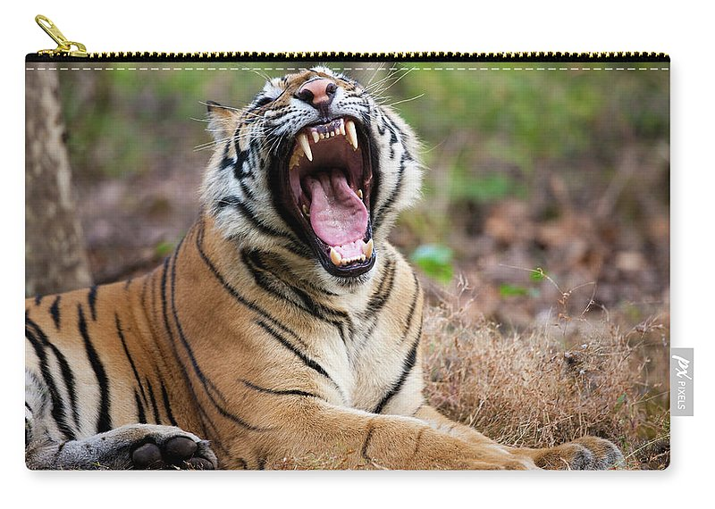 Snarling Carry-all Pouch featuring the photograph An Adult Tiger In Bandhavgarh National by Mint Images - Art Wolfe