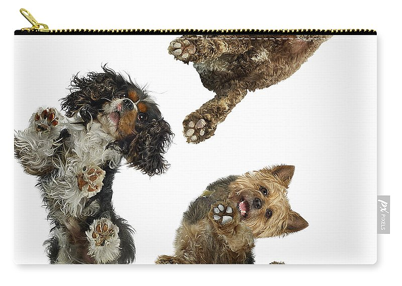 White Background Carry-all Pouch featuring the photograph 3 Dogs Looking Down by Gandee Vasan