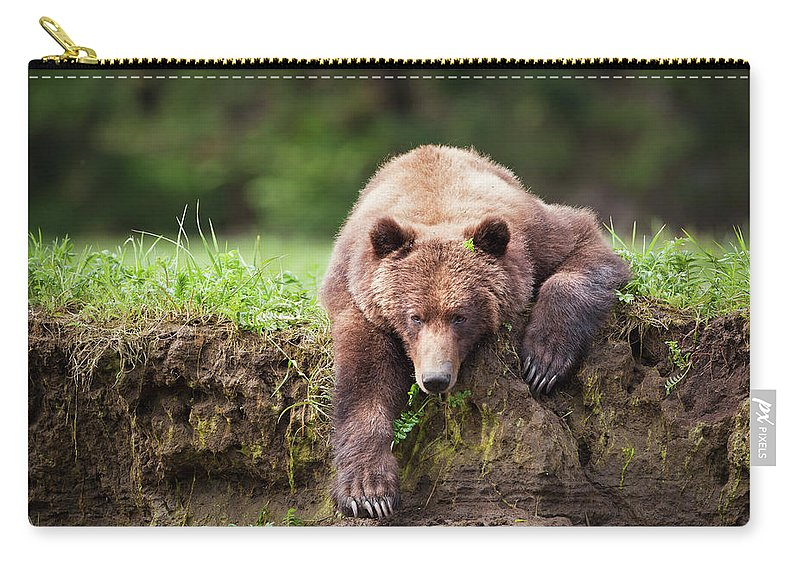 Brown Bear Carry-all Pouch featuring the photograph Grizzly Bear Ursus Arctos Horribilis by Richard Wear / Design Pics