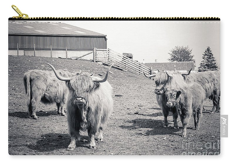 Highland Cattle Carry-all Pouch featuring the photograph Highland Cattle by Malgorzata Larys