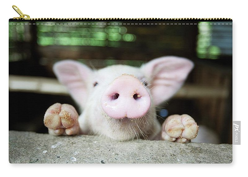 Negros Oriental Carry-all Pouch featuring the photograph A Baby Pig In Its Pen by Design Pics / Deddeda