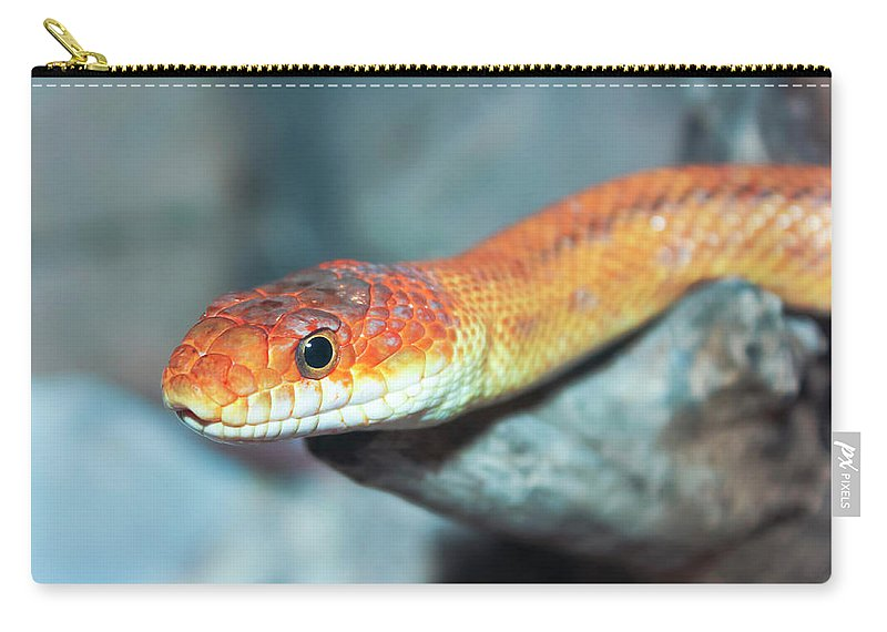 Animal Carry-all Pouch featuring the photograph A Close Up Of A Ground Snake by Derrick Neill