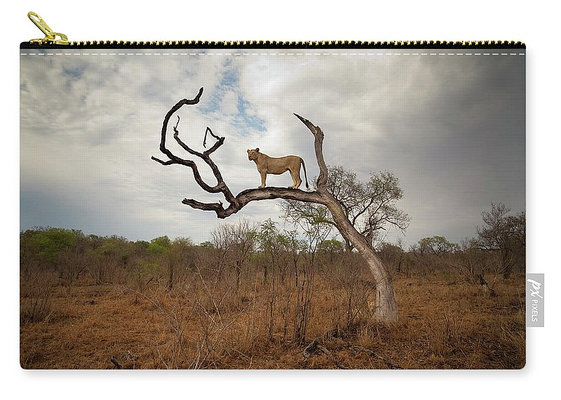 Scenics Carry-all Pouch featuring the photograph A Female Lion Standing On Bare Branch by Sean Russell