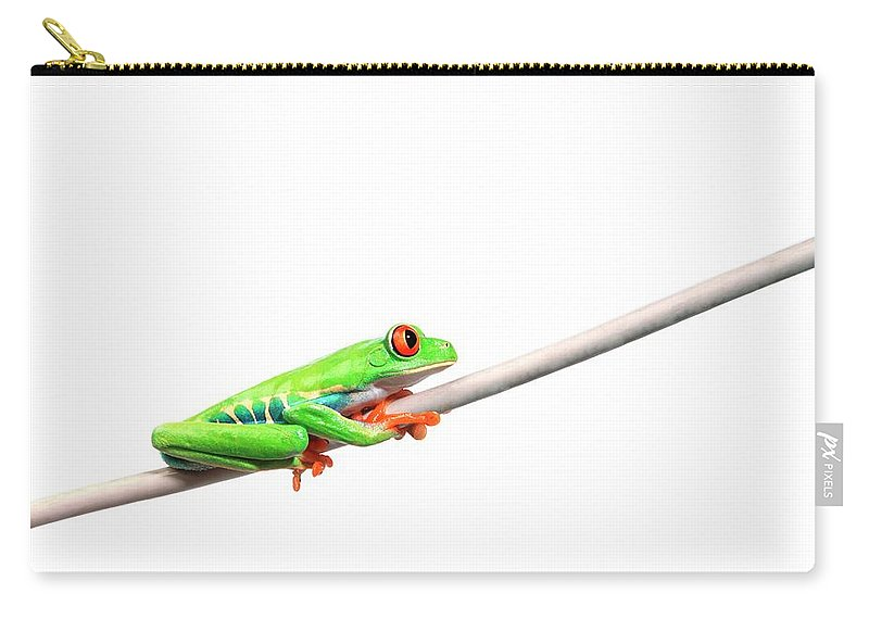 Rope Carry-all Pouch featuring the photograph A Frog Hanging On by Design Pics/corey Hochachka