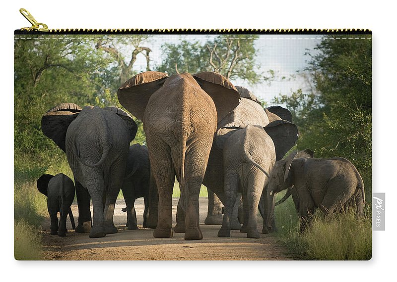 Cow Carry-all Pouch featuring the photograph A Herd Of Elephants Heading Away From Us by Jono0001