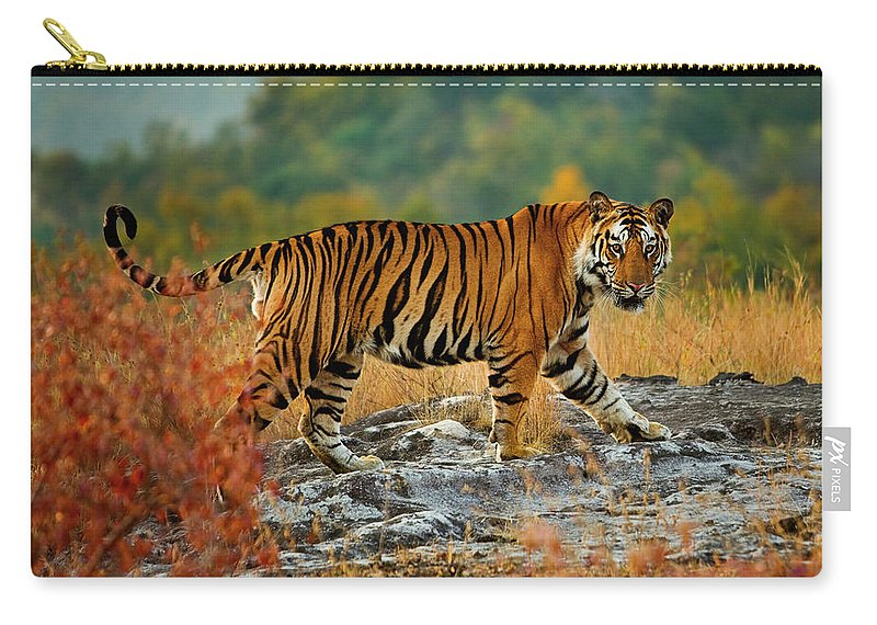 Vertebrate Carry-all Pouch featuring the photograph A Large Tiger In Bandhavgarh National by Mint Images - Art Wolfe