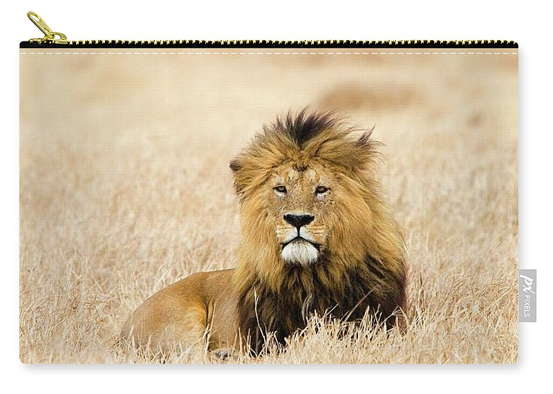 Grass Carry-all Pouch featuring the photograph A Lion by Sean Russell