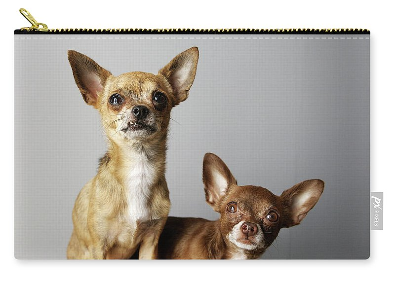 Animal Themes Carry-all Pouch featuring the photograph All Dog, No Cat by Laura Layera