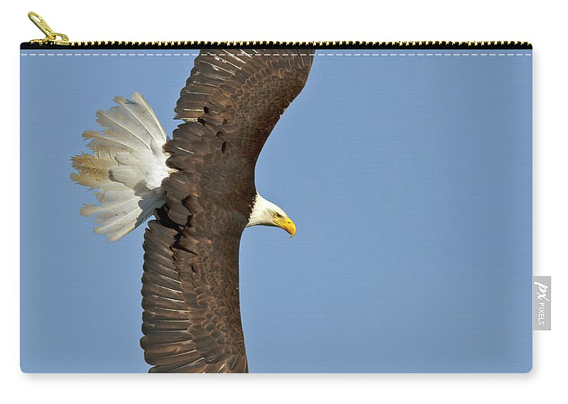 American Carry-all Pouch featuring the photograph American Bald Eagle In Flight IIi by Gary Langley